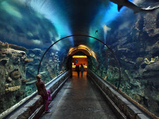 Tunnel with sharks at Shark Reef Aquarium © D.H. Parks